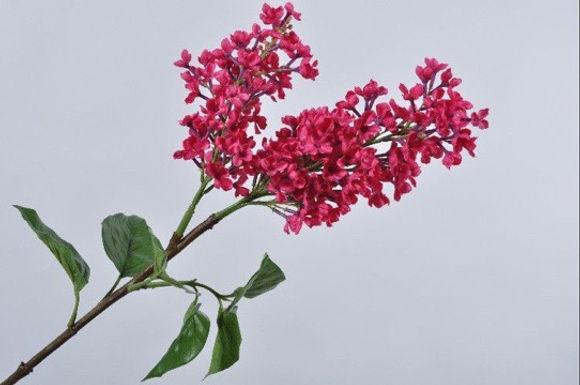 Lilac Spray Roze