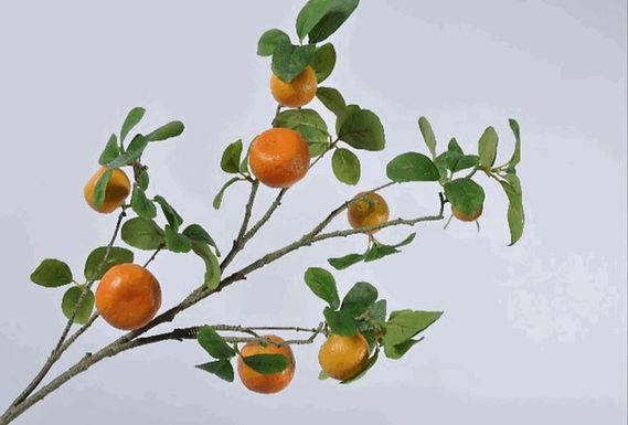 Sinaasappeltak XL