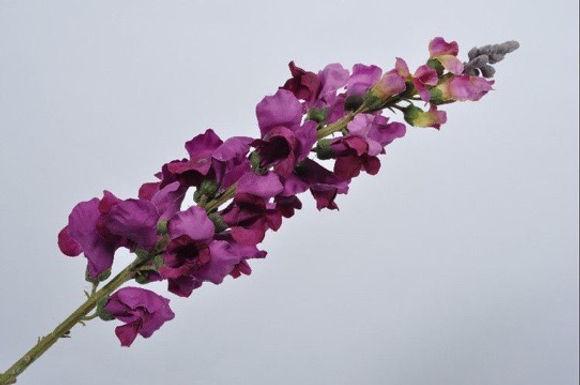 Hollyhock Steel Lavendel Paars
