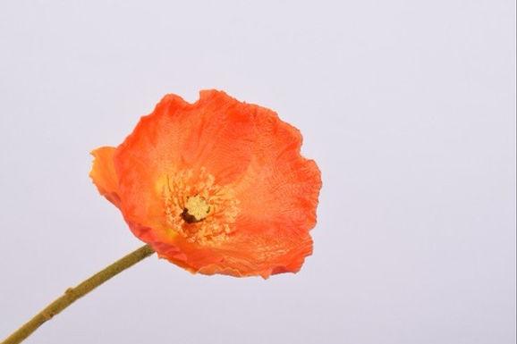 Poppy Spray Orange