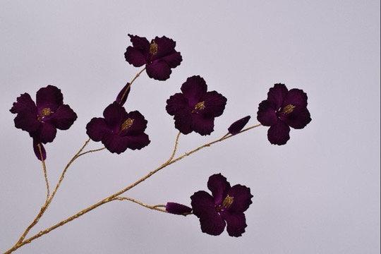 Hibiscus Tak Goud Paars