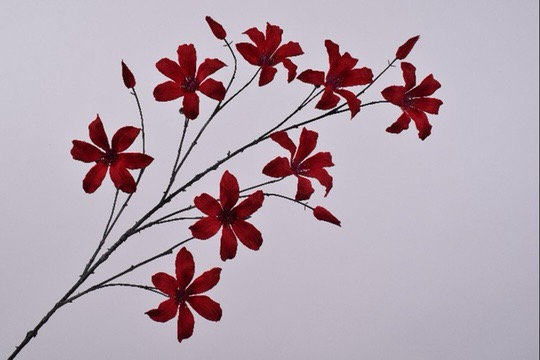 Clematis Tak Rood