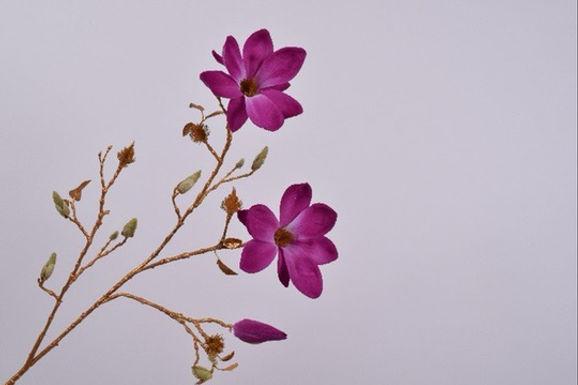 Magnolia Tak Goud Lavendel