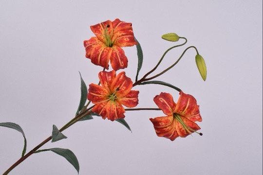 Lelie Tak Oranje