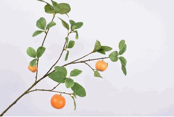 Sinaasappeltak M