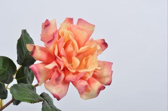 Roos Open Peach
