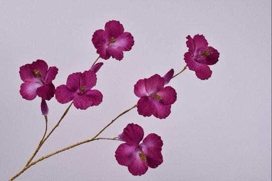 Hibiscus Tak Goud Lavendel