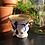 Thumbnail: Robo Cups set van 2