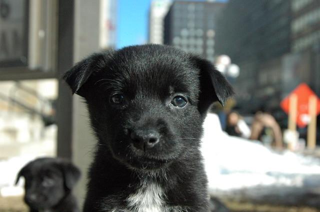 """My dog Zuzu when she was widdle (that's puppy talk for """"little"""")"""
