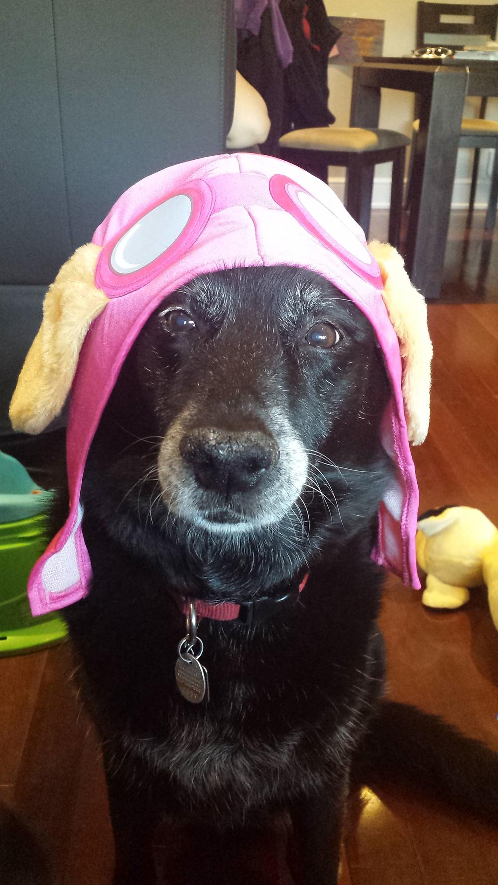 A recent photo of Zuzu wearing a Paw Patrol hat