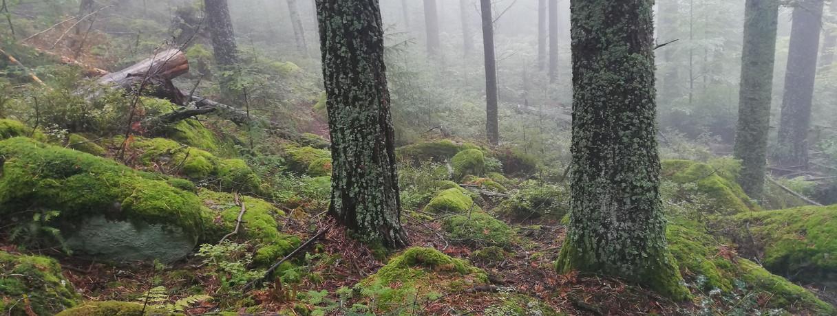 brume sur lichens