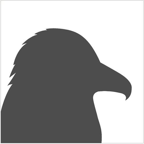 crow (beginner)