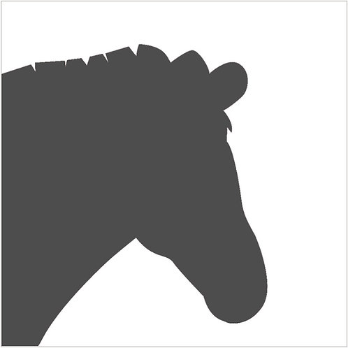 zebra (beginner)