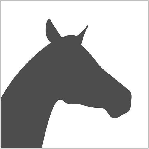horse (beginner)