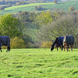May Hill Farm and Livery, Grazing