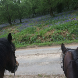 May Hill Farm and Livery, Hacking