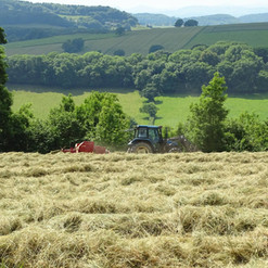 May Hill Farm and Livery, Hay Making