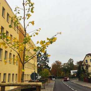 Bauhof Taucha startet Baumpflanzsaison