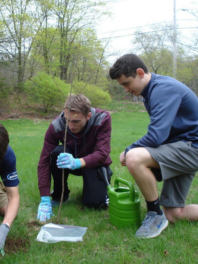 Mansfield High School students (left to right), Patrick Heavey, Jackson Miller, and Matthew Katz, plant a red maple tree.