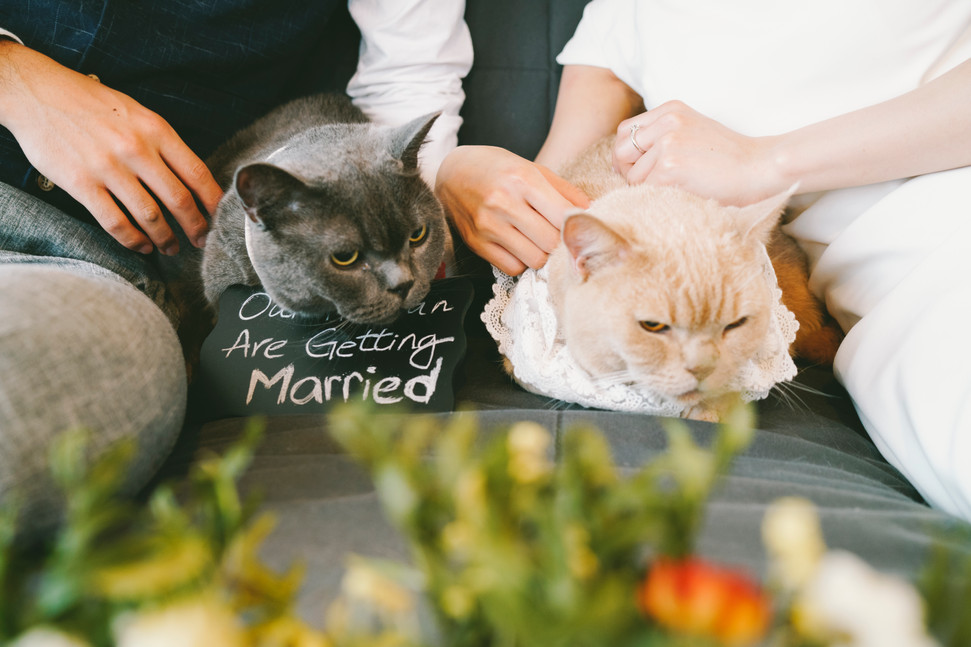 Pre Wedding with VERC, Cat
