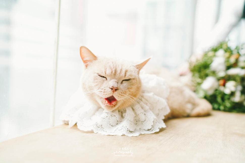 cat Angela