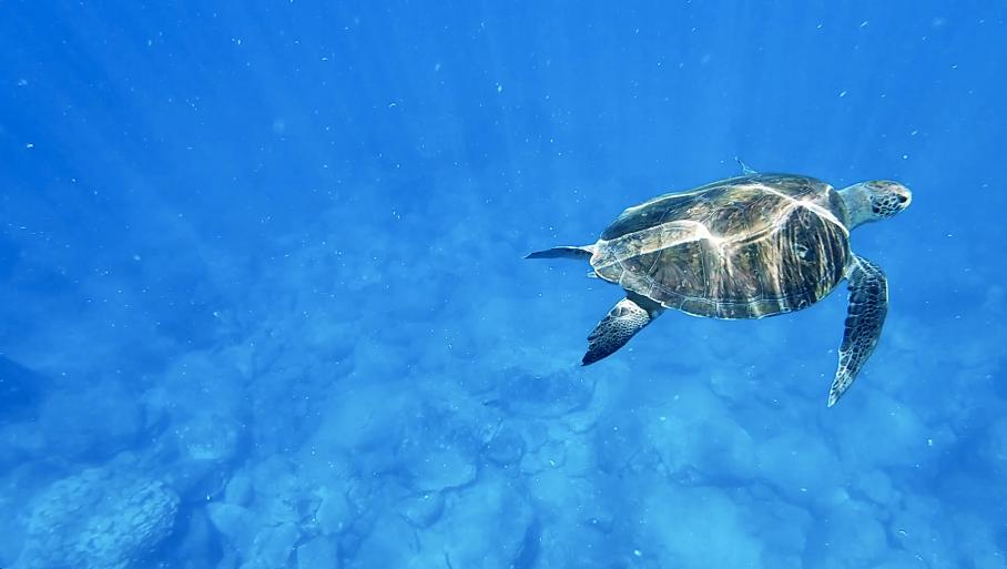 snorkeling kayak tenerife tortue