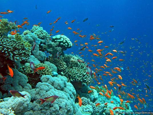 5 raisons de faire du Snorkeling