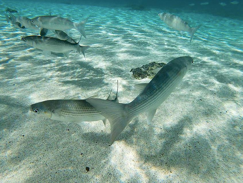 Snorkeling sur l'île de Fuerteventura