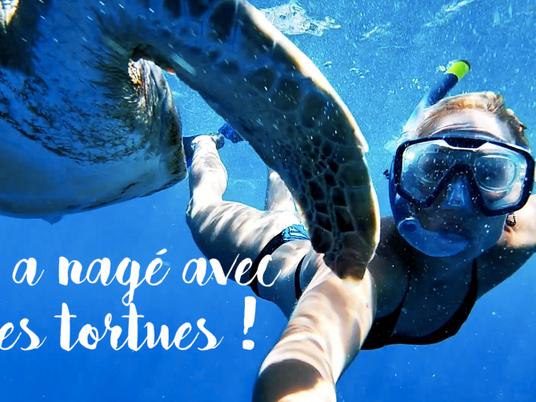 SNORKELING - On a nagé avec des tortues !