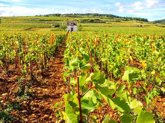Micro-aventure #2 : La Voie des Vignes à vélo, Bourgogne