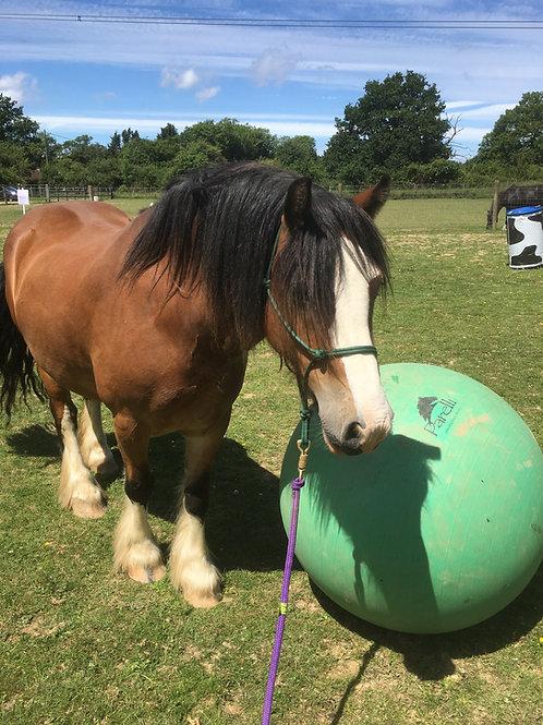 Sponsor A Pony - Tom
