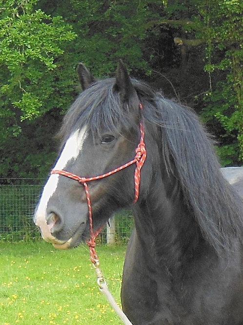 Sponsor A Pony - Prince