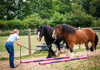 Equine Partners Horses