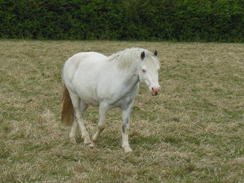 Sponsor A Pony - Charlie