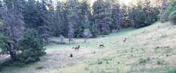 Cloudcroft's Elks