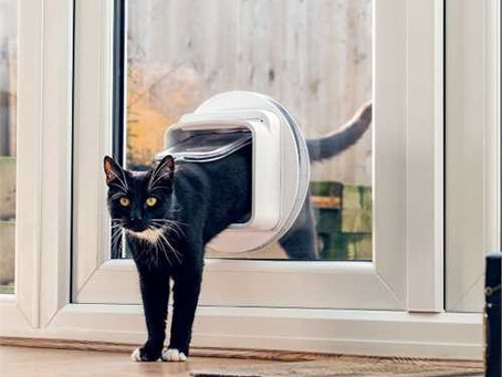 How to Train Your Cat to Use a Cat Flap