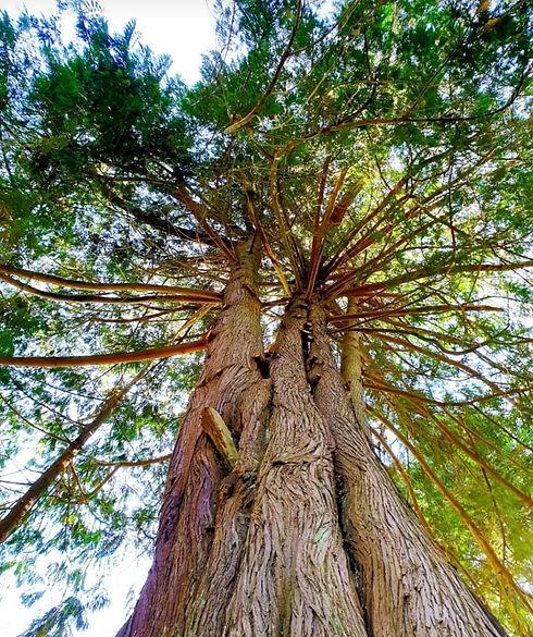 Tree looking up.jpg