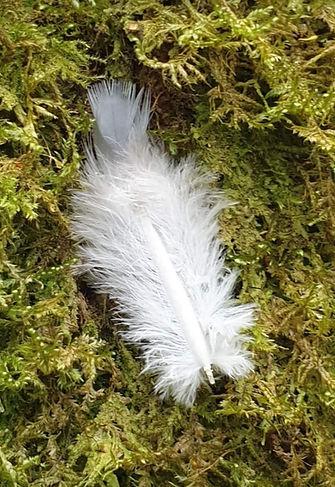 moss feather.jpg