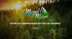 marvel bloom portfolio