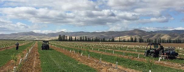 agriculture.jpg