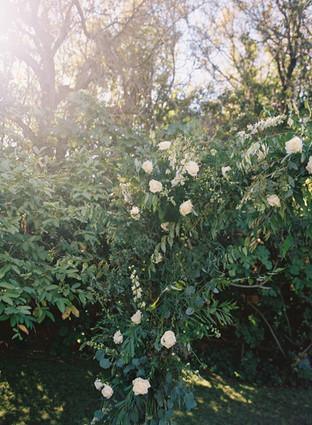 Backyard后院婚礼42.jpg