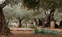 Israel_Nov'15_0001_Ebene 22