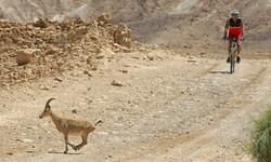 Israel_Nov'15_0009_Ebene 14