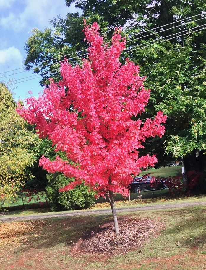 Wangaratta Trip Autumn colours.jpg
