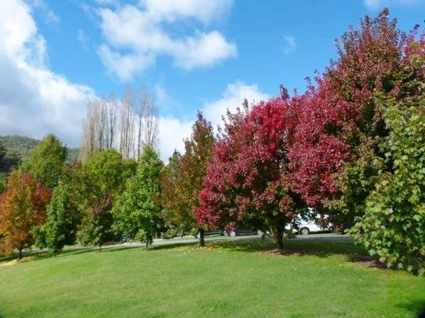 Wangaratta Trip colours
