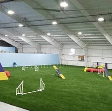 Competition agility ring
