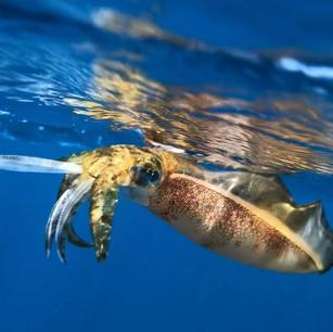 ジェット釣り水中映像