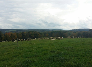 Project Grass Field Day Set for October 18, 2019 in Potter County, PA