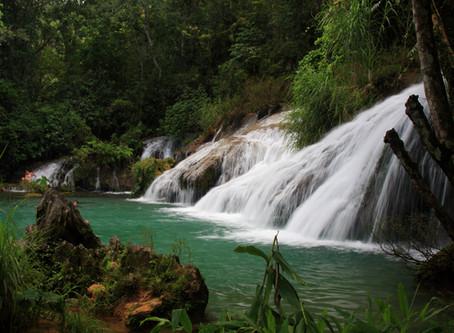 Die Lunge der Erde - Der Amazonas