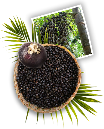 what_is_acai_image-1.png